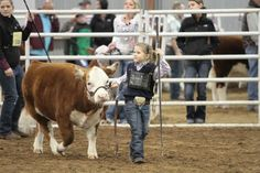 2013 :: San Antonio Stock Show And Rodeo competitor