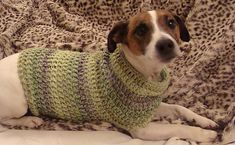 Ravelry: Jack Russell Dog Jumper pattern by Marie Riddle