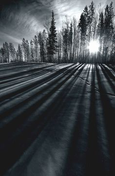 ~~Lines | shadows fall through the tall trees mono landscape | by Dan Newcomb Photography~~