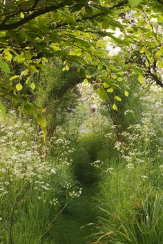 "// ""a mown path leads through a sea of cow parsley to a willow arch on a still, early, summer morning."""