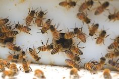 Bees will help your garden grow