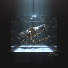 Dark Room visuals on Behance