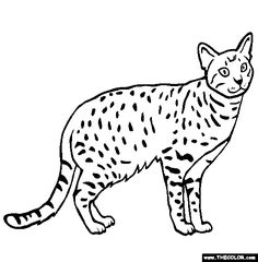 ocicat breed cat online coloring page
