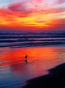 Sunset on Huntington Beach...it really does look like this :)