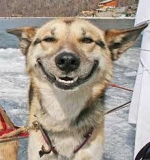 Resultado de imagen para happy dogs