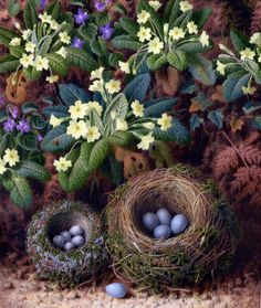 James T Clapham (British, 19th century) - Watercolor still life with bird's nests, primulas, ferns, ivy and violets.