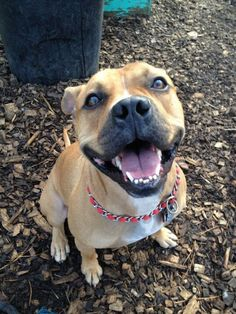 """""""Cheese!""""  Smiling because I was adopted!"""