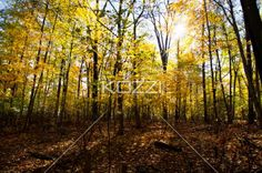 forest with autumn trees. - View of forest with autumn trees.