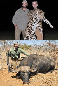 """Donald Trump Jr. and Eric Trump, brothers on a thrill-kill mission to shoot innocent and endangered animals. Please speak out against abuse and cruelty in ALL its forms. Boycott the Trumps in any way you can. DO NOT watch their television show, """"celebrity apprentice"""". Please boycott the Trumps. This cannot be tolerated. They kill """"Animals"""" for their thrills and kicks. Do YOU think he ate these?  So sad"""