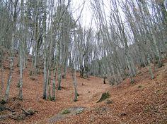 2007Litohoro