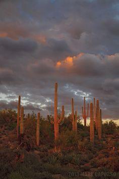 Sonoran Desert Preserve, Scottsdale, Arizona; photo by Mark Capurso