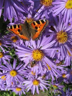 Great photo of some pollinators getting their last fix before autumn - from Susie's garden pinned with Pinvolve