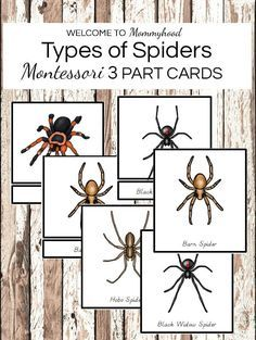 Montessori Spiders Printables TYPES OF SPIDERS Montessori 3 part cards. These cards areha perfect for students of different ages (primary, elementary) who are studying spiders. The 3 part cards are perfect for learning the names of 13 different species.