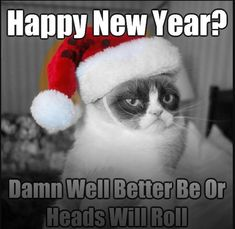 12 Days Of Grumpy Cat Christmas - Koala Funny - Funny Koala meme - - Don't lose your temper if they don't clean it then they go on vacation without you! The post 12 Days Of Grumpy Cat Christmas appeared first on Gag Dad. Funny Merry Christmas Memes, Grumpy Cat Christmas, Christmas Humor, Xmas Jokes, Grumpy Cat Images, Funny Grumpy Cat Memes, Funny Memes, Hilarious, Car Memes