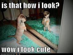 me so cute puppy