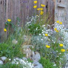 Piccoli giardini di montagna   Italian Botanical Trips Plants, Flora, Plant