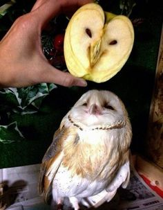 Funny People And Things That Look Like Something Else (10 Photos)