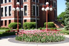 Orange City Tulip Festival - Thousands of tulips line our streets, fill our gardens and flower pots. See the tulip beds in downtown and throughout Orange City. Orange City, Tulip Festival, Flower Pots, Flowers, Small Towns, Iowa, Great Places, Tulips, Beds