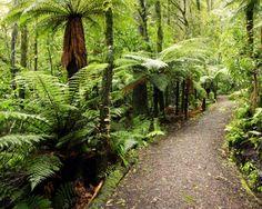 Auckland's Prettiest Walks