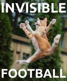 Cat kicking invisible football