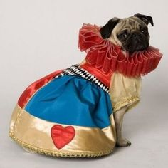 Queen of Pugs. | 26 Costumes That Prove Pugs Always Win At Halloween