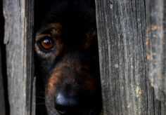 5+Tipps+für+den+Umgang+mit+Angsthunden