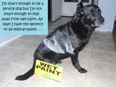 """I'm smart enough to be a service dog, but not smart enough to stay away from wet paint. At least I have the decency to be embarrassed."""
