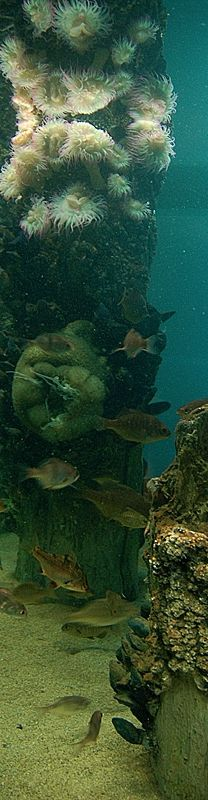 This is what our fish tank should look like @Kristin M. & @catherine gruntman Mills #nature #pins