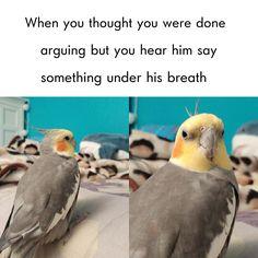 Wot u say funny birds, cute birds, i like birds, funny animal memes I Like Birds, Cute Birds, Funny Animal Memes, Cute Funny Animals, Funny Pets, Bird Meme, Funny Parrots, Funny Birds, Budgies