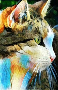 Cat Art Print 8 x10 inch glossy free shipping in the USA $10 order www.facebook.com/dgortlieb