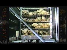 Le bien-être animal et l'éthique - YouTube