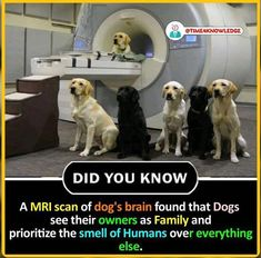 animal amazing facts - a mri scan of dog's brain found that dogs see their owners as family and prioritize the smell of humans over everything else. Wierd Facts, Wow Facts, Real Facts, Wtf Fun Facts, Amazing Science Facts, Some Amazing Facts, Unbelievable Facts, Awesome Facts, True Interesting Facts