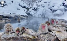 Jon Rafman Jigokudani Monkey Park, Yamanouchi, Japan, 2012 Archival pigment print mounted on dibond 40 x 64 inches<. Monkey Park Japan, Google Street View, Jon Rafman, Photos Panoramiques, Jigokudani Monkey Park, Animal Reiki, Maps Street View, Street Veiw, Baboon