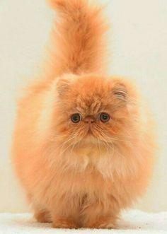 Online Dating Profilo amo i gatti