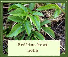 Pesto z bršlice Korn, Pesto, Plant Leaves, Health Fitness, Plants, Honey, Plant, Fitness, Planets