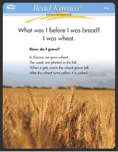 P - 5 Wheat Seeds PDF First grade social studies Food production Kansas Day, State Of Kansas, Museum Education, Music Classroom, Classroom Ideas, Future Jobs, Teaching Social Studies, Preschool Lessons, Beginning Of School