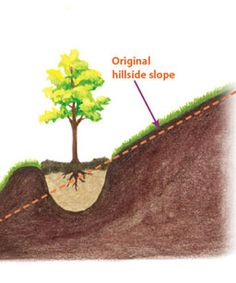 What's the best way to plant a tree on a hillside? Find out the answer at www.finegardening.com.