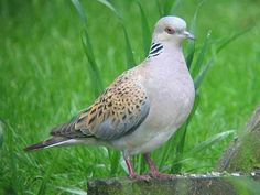 If the turtle dove were a nest-builder, it would build its own nest. ~ Armenian proverb