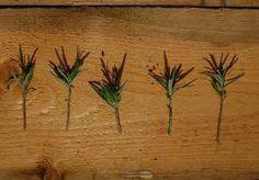 lavendel stekken Garden Insects, Green Life, Garden Inspiration, Flora, Planters, Home And Garden, Gardens, France, Vegetables