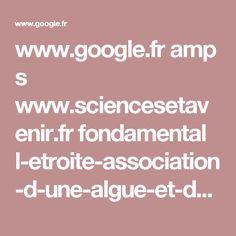 www.google.fr amp s www.sciencesetavenir.fr fondamental l-etroite-association-d-une-algue-et-d-une-salamandre_22710.amp
