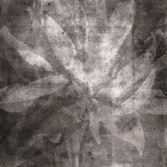 """ENTRECHAT II: Entrechat is a classical ballet term meaning """"interweaving"""" or """"braiding"""". A lovely term to describe the woven light-dappled aspect of this botanical form. From the Pomelo Press Toujours Giclée Print Collection."""