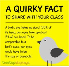 A quirky fact about birds to share with your class - from Treetop Displays. Visit our TpT store for printable resources by clicking on the provided links. Designed by teachers for Pre-Kindergarten to Grade. Animal Facts For Kids, Fun Facts For Kids, Fun Facts About Animals, Teaching Quotes, Teaching Tips, Capturing Kids Hearts, Bird Facts, School Age Activities, Eye Facts