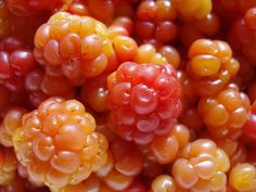 Cloudberries.....I wish I could get some!! Anyone heading to Finland any time soon?  lol