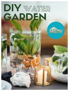 Water Garden Centerpiece - annie garcia - HOME Indoor Water Garden, Indoor Fountain, Indoor Plants, Water Gardens, Diy Gardening, Hydroponic Gardening, Organic Gardening, Indoor Hydroponics, Aquaponics Greenhouse