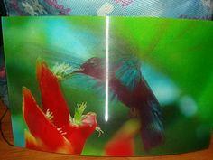 3D pták