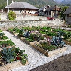de larges allées pour faciliter les déplacements du jardinier.