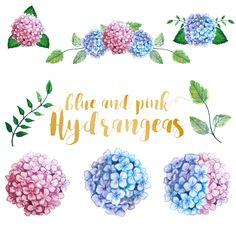 Watercolor Hydrangea Clip Art Floral by Annakristal on @creativemarket