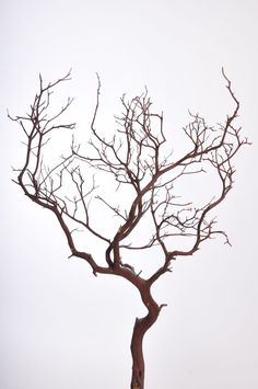 "Manzanita Branches in Natural Color Approx. 36-46"" Tall 10 per Case Ships Alone - US Only"