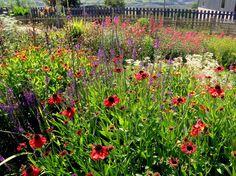 Mixed bee friendly perennials at Kilcoan Gardens, Islandmagee