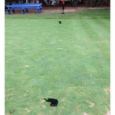 Union League Club of Philadelphia at Torresdale, a Donald Ross course, features their Club's logo as tee markers.  The Union League has a very interesting history and the facility in downtown Philadelphia is a treat to visit and the course is a gem.